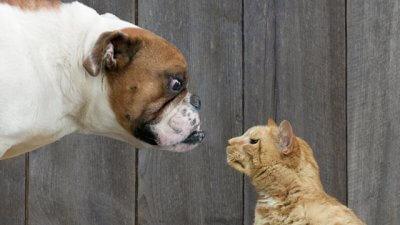gty_dog_cat_ll_1203008_wmain